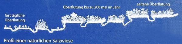 Salzwiesenprofil